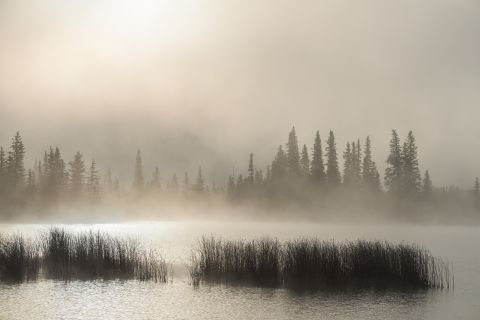 Misty lake at sunrise