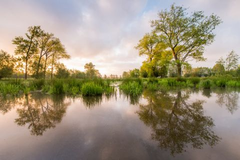 Bomen in de Keuzemeersen reflecteren in een gracht