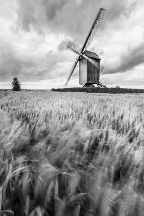 Mill and wheat field